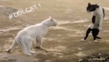 LOLCAT - The funniest videos of cats