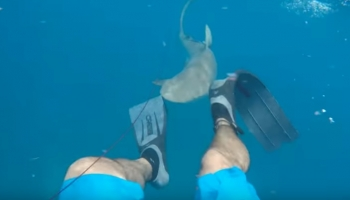 8 shark attacks on video