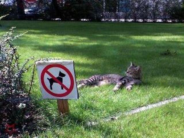 Interdit aux chiens, pas aux chats !