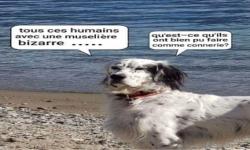 Coronavirus : pensée d'un chien