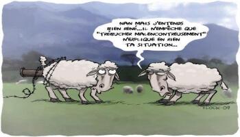 Une situation �trange pour un mouton