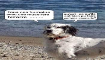 Images - Coronavirus : pensée d'un chien