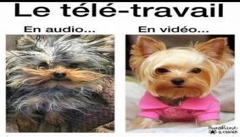 Images - Télétravail : différences entre audio et vidéo