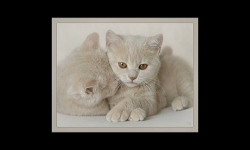 PPS Slideshows - Some animals with plume