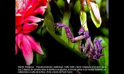 Diaporamas PPS - Concours de photographies 2010