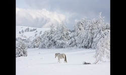 Diaporamas PPS - Tombe la neige