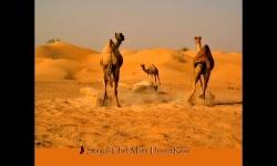 Diaporamas - Scènes au coeur du désert