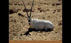 Diaporamas PPS - Scènes au coeur du désert