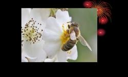 Diaporamas - Visite de la ruche