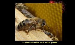 Diaporamas PPS - Visite de la ruche