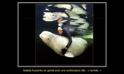 Diaporamas - La sirène et les belugas