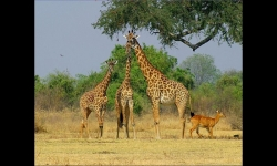 Slideshows - The charms of Zambia