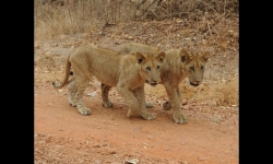 PPS Slideshows - The charms of Zambia