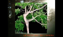 PPS Slideshows - Surprising and unusual trees
