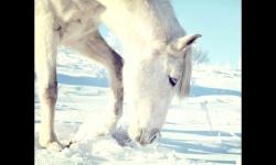 Presentazioni - Fata invernale