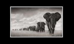 Diaporamas PPS - Afrique la Magnifique