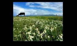 Diaporamas - L'Edelweiss, la fleur d'altitude