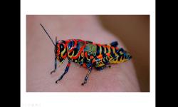 Diaporamas PPS - 25 animaux aux couleurs improbables