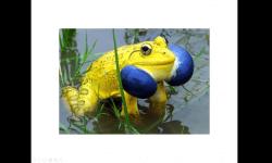 Diaporamas - 25 animaux aux couleurs improbables