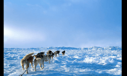 Diaporamas PPS - La beauté de l'Antarctique