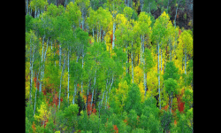 PPS Slideshows - The 4 seasons of Grand Canyon and Colorado
