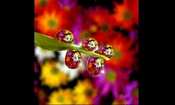 Slideshows - Photos of raindrops