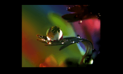 PPS Slideshows - Photos of raindrops