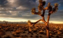 Diaporamas - La fascination du désert