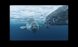 Slideshows - Photos from the movie Oceans