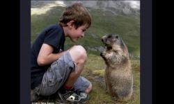 Diaporamas PPS - Mowgly, l'enfant qui sait parler aux marmottes
