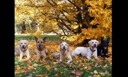 Diaporamas - L'arrivée des couleurs à l'automne