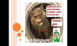 Diaporamas PPS - Humour belge