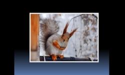 Diapositivas PPS - Fotografías de ardillas