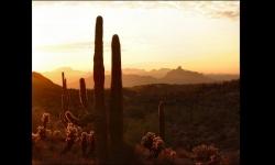 Diaporamas PPS - Le désert d'Arizona