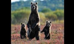 Diaporamas PPS - Voyage au Kamtchatka, au Pays des Ours