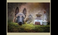 Diaporamas PPS - Le chien et le hibou