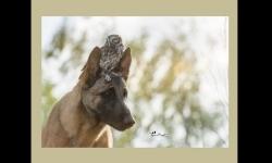Diaporamas - Le chien et le hibou