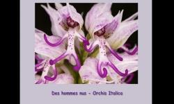 Diaporamas - Fleurs exceptionelles