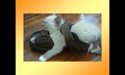 Diaporamas - Petit logis pour animaux