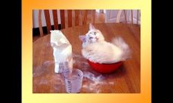 Diaporamas PPS - Petit logis pour animaux
