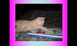 Presentazioni - Il gatto e l'uccello