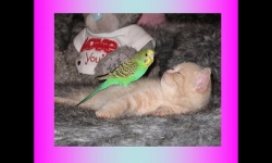 PPS Slideshows - The cat and the bird