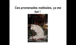Diaporamas PPS - Un peu d'humour avec les animaux