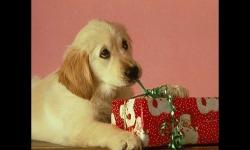 Diaporamas - Noël des animaux
