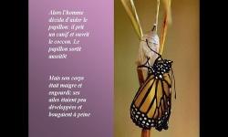 Diaporamas - La leçon du papillon