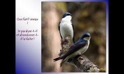 Diaporamas - Leçon de persévérance avec les oiseaux
