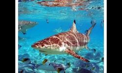 Diaporamas - La beauté des requins