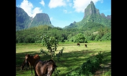 Diaporamas PPS - Tahiti