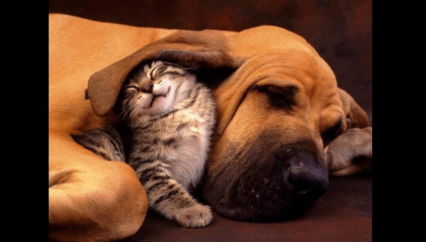 La tendresse - Page 3 277-2638a431-tendresse-chien-chaton