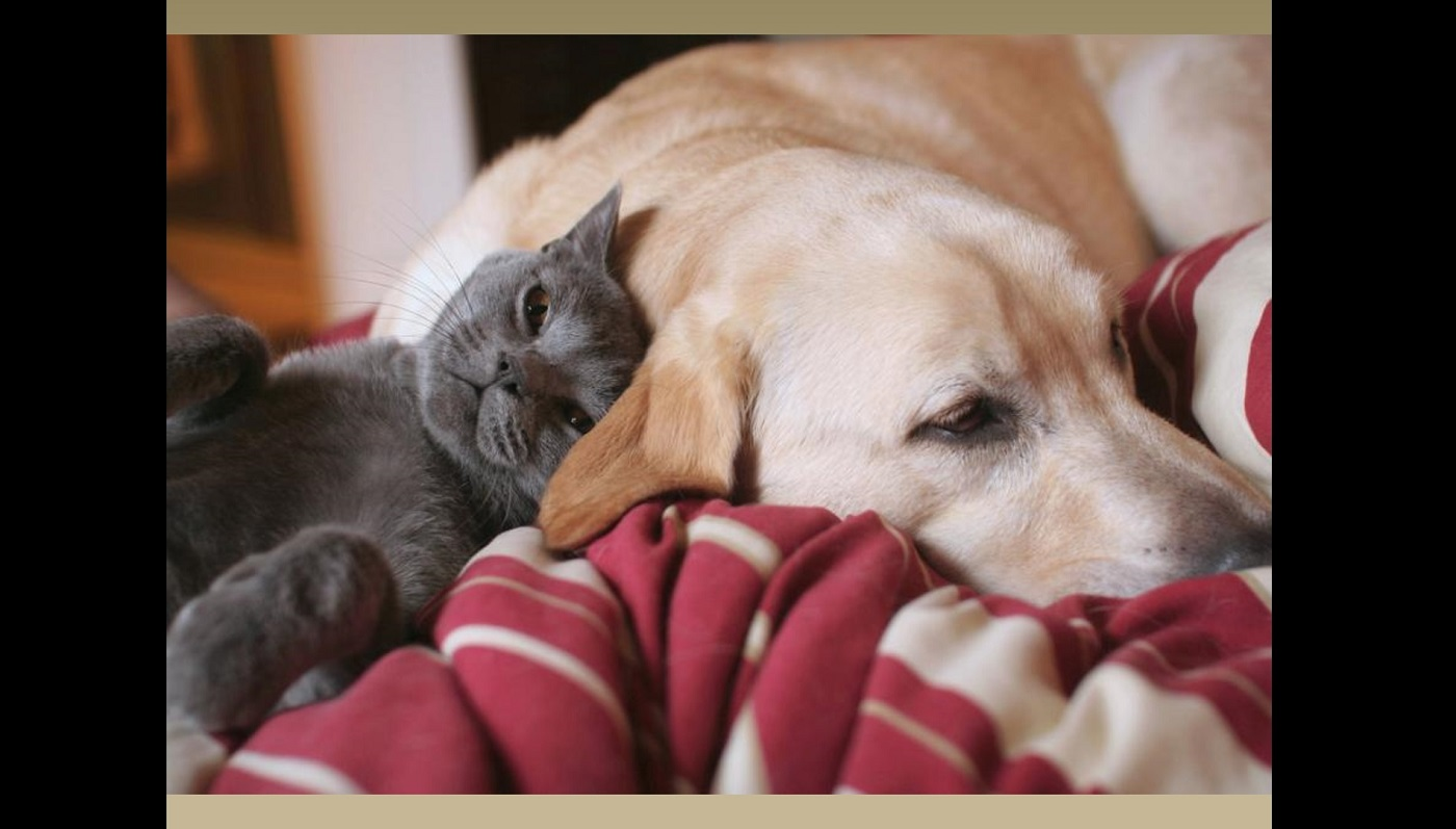 277-a2fd265a-tendresse-chien-chat